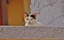 Catsaramas!! by Chinga