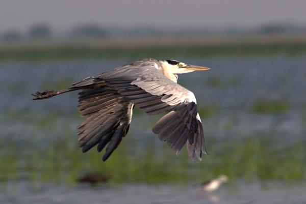 Rapid fly by ARGHYASIKDAR