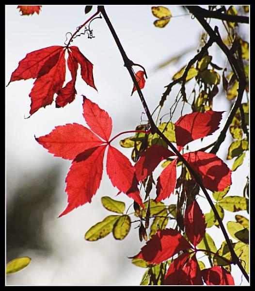 Autumn colours by notsuigeneris