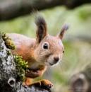 Squirrel close ups. by kuvailija