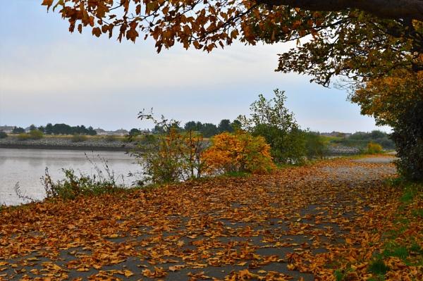 Autumn Carpet by netta1234