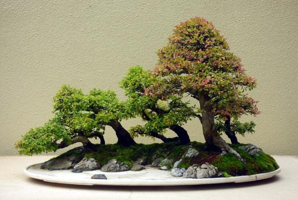 bonsai 309 by emit1