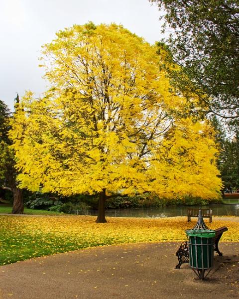 Leamington Park by Diyena
