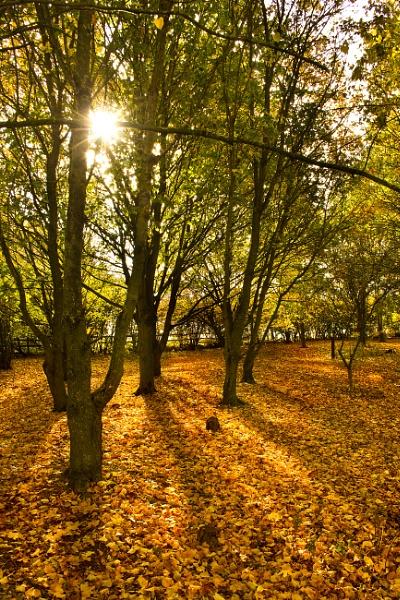 Sunny autumn day by Diyena