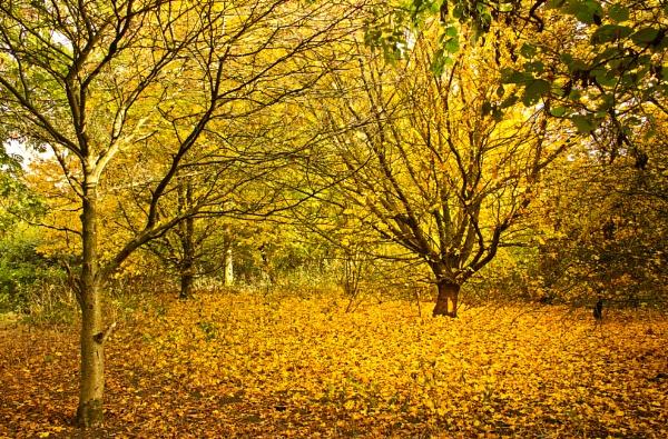 Yellow by Diyena