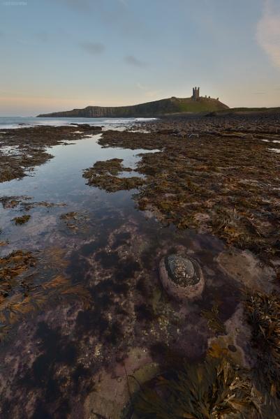 Autumnal Seaweed by ttarpd
