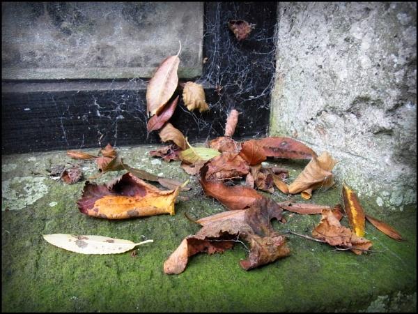 Autumn by bwlchmawr