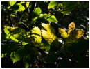 Autumn by Nikonuser1