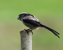 LTT - Not your normal poses! by Holmewood