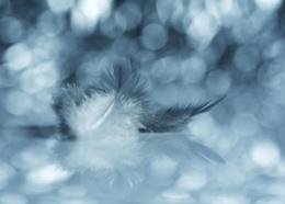 Photo : Softly softly
