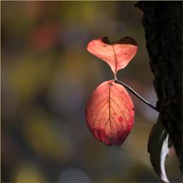 Autumn 5: Dogwood
