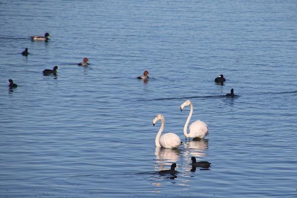 A few more birdies by jocas