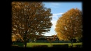 Autumn trees by IreneClarke