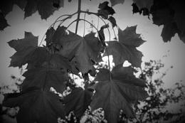 Photo : Leaves