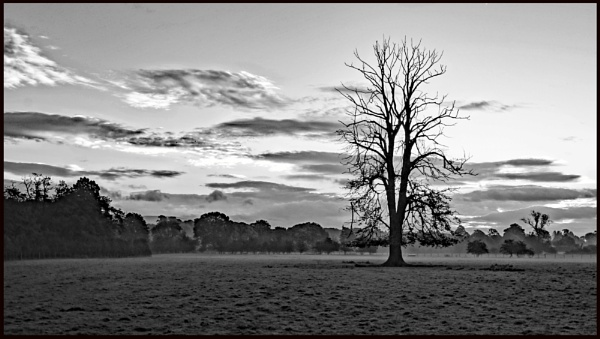 Lone tree by BillRookery