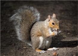 This Nut's Mine