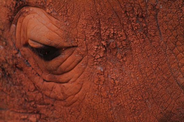 I Rhino by stevecornforthphotography