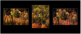 Autumn Gold Triptych