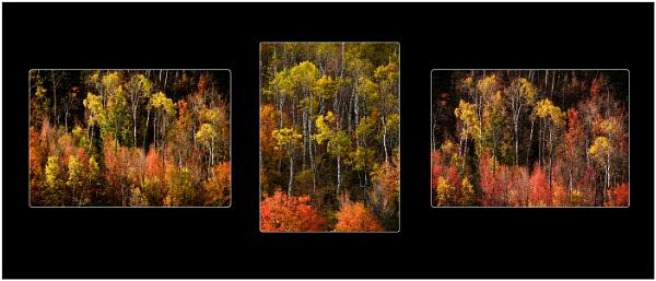 Autumn Gold Triptych by dven