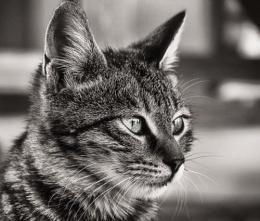 Top Cat.....