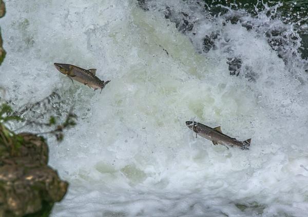 the river KENT run