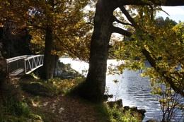 Balmaha Autumnal Colours and light on Loch Lomond