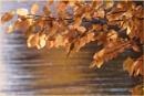 October Sunshine by Joline