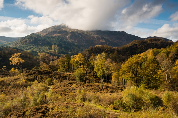 Trossachs Forest by PaulHolloway