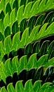 Green leaf and shadows by helenlinda
