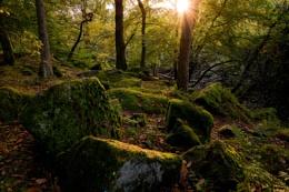 Padley  Woods Peak District Derbyshire