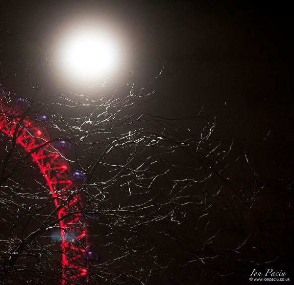 London Eye at Night by photoion