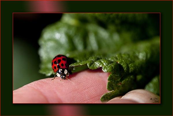 Bugfest by LynneJoyce