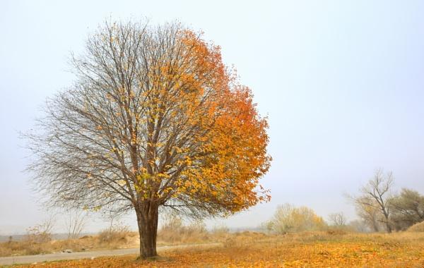 Solitary Single Tree by jordachelr