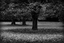 Autumnal Leaves by optik