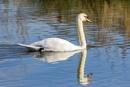 Swan Lake by SteveMoulding
