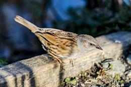 Unknown bird by me