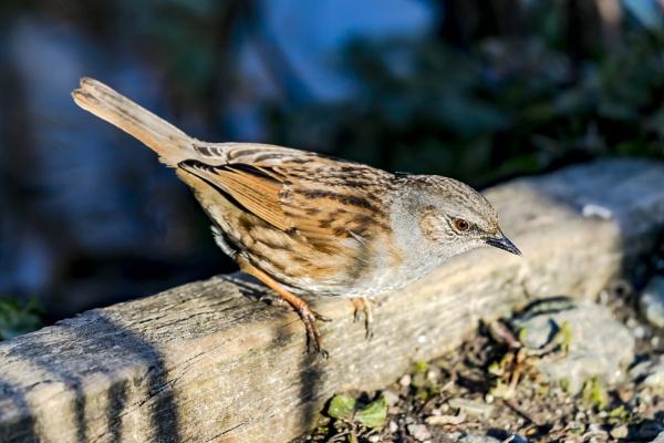 Unknown bird by me by SteveMoulding