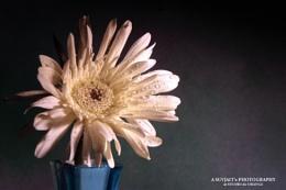 a Flower Candid ...
