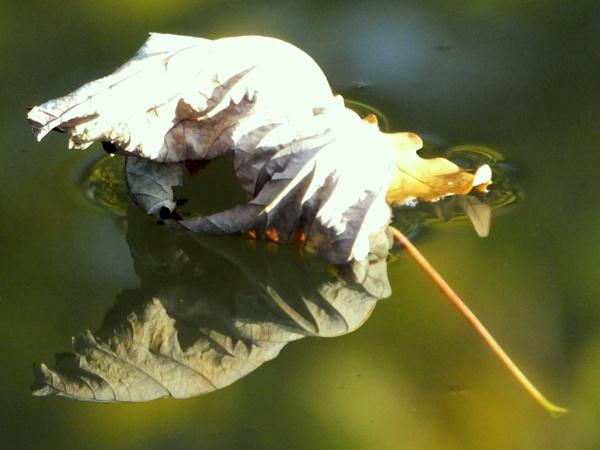 As Autumn Floats Away..... by ianmoorcroft