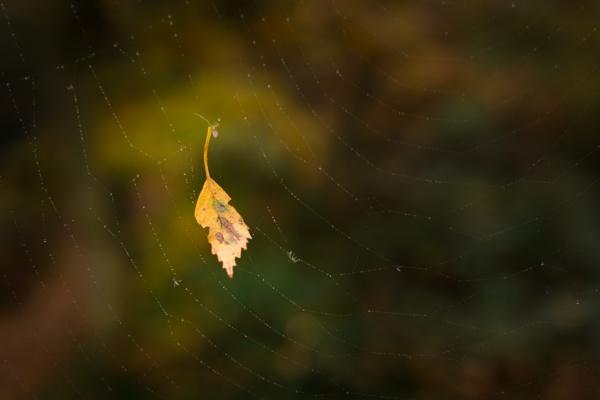 Left Hanging by jasonrwl
