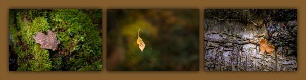 Autumn Triptych by jasonrwl