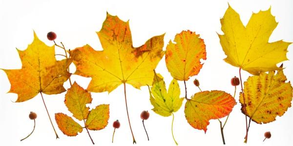 Autumn Leaves by jasonrwl