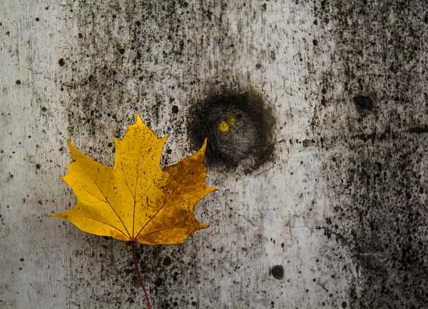 Lovin\' the Leaf by Irishkate