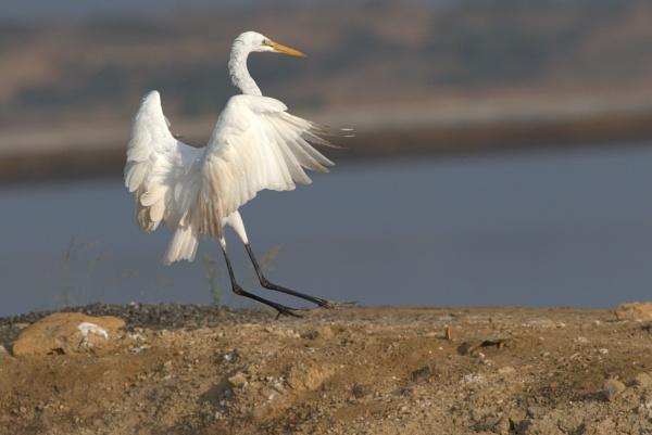 Perfect landing by ARGHYASIKDAR