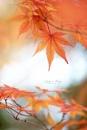 Simply Autumn by jackyp
