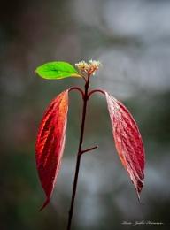 Autumn colors - 3.