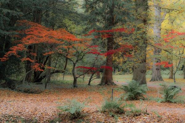 Thorp Perrow Arboretum by RadarUK