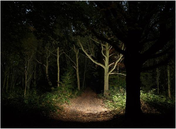 Spooky Wood by dark_lord