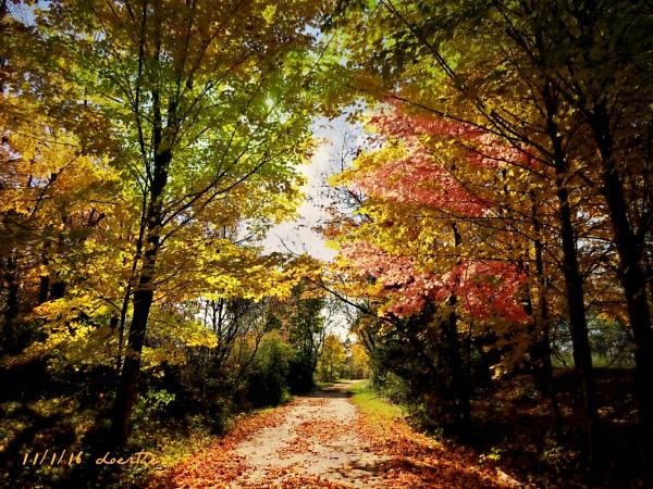 November in Michigan by doerthe
