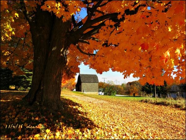 Nov. 4th in Michigan by doerthe